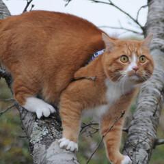 フォロー大歓迎/にゃんこ同好会/猫との暮らし/ねこのきもち/雪/散歩/... 雪が降ってきたニャー🙀 急いで帰るニャー…