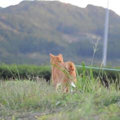 秋/ねこのきもち/散歩/おでかけ/フォロー大歓迎 ちょうちょだ➿➿➿🐾😻 キャッチ~⁉️👀…(5枚目)