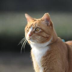 フォロー大歓迎/にゃんこ同好会/猫との暮らし/ねこのきもち/ねこにすと/散歩/... 山手の桜も咲いてるニャー🌸😻 行ってみた…(3枚目)