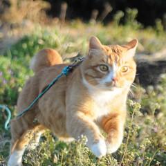 フォロー大歓迎/にゃんこ同好会/猫との暮らし/ねこのきもち/散歩/晴れ やっと晴れたニャー😸☀️ 外は楽しいニャ…