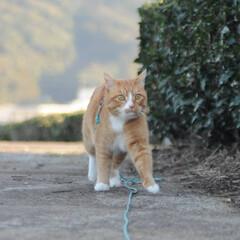 フォロー大歓迎/にゃんこ同好会/猫との暮らし/ねこのきもち/晴れ/散歩/... やっぱり晴れは良いニャー😻☀️☀️☀️🐾…