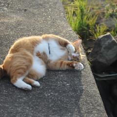 フォロー大歓迎/にゃんこ同好会/猫との暮らし/ねこのきもち/ポカポカ/散歩 今日はポカポカ陽気で散歩もウキウキだニャ…(3枚目)