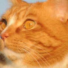 フォロー大歓迎/にゃんこ同好会/猫との暮らし/ねこのきもち/寒い/散歩 寒いけど良い天気になったニャー😸☀️(7枚目)