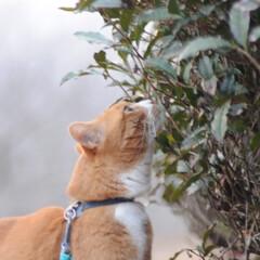 フォロー大歓迎/にゃんこ同好会/散歩/猫との暮らし/ねこのきもち/おでかけ 日が落ちて冷えてきたニャー🙀 お日様が恋…(4枚目)