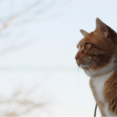 写真/ねこのきもち/トラ/ねこ/フォロー大歓迎/冬/... 日が沈んでいくニャー😿