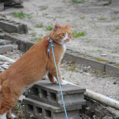 フォロー大歓迎/にゃんこ同好会/猫との暮らし/ねこのきもち/散歩/おでかけ 今日も気合い入れて出動😸🐾🐾🐾🐾🐾(6枚目)