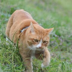 フォロー大歓迎/にゃんこ同好会/猫との暮らし/ねこのきもち/ねこにすと/散歩 気になる杭だニャー😻😻😻 いっぱいスリス…(7枚目)