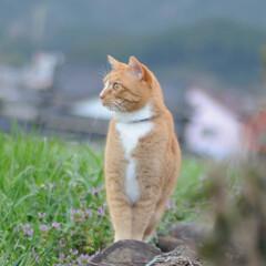 にゃんこ同好会/猫との暮らし/ねこのきもち/曇り/散歩/おでかけ 今日もなんとか散歩出来ましたニャー😻🐾🐾…