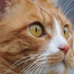 フォロー大歓迎/にゃんこ同好会/猫との暮らし/ねこのきもち/散歩/おでかけ 今日も気合い入れて出動😸🐾🐾🐾🐾🐾(9枚目)
