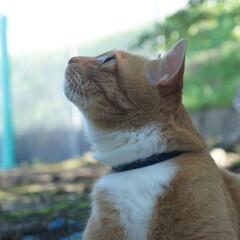 夏/ねこ/ねこのきもち/散歩/フォロー大歓迎/にゃんこ同好会 暑いニャー💦💦🙀 外では木陰でまったり😸…(3枚目)