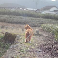 にゃんこ同好会/猫のいる暮らし/ねこのきもち/晴れ/散歩/おでかけ/... わーい😸日が射してきたニャー😸🌤️ 明日…(4枚目)