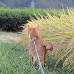 ねこのきもち/晴れ/散歩/おでかけ/フォロー大歓迎 今日は爽やかに晴れて気持ちよく散歩できた…(7枚目)