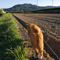 フォロー大歓迎/にゃんこ同好会/ねこのきもち/ねこ/散歩/猫 箱からにゃんこの手生えた🐾😸🐾⁉️ 今日…(3枚目)