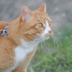 フォロー大歓迎/にゃんこ同好会/猫との暮らし/ねこのきもち/すずめ/鳥/... すずめ🐦さん➿😽 待って~😽🐾🐾🐾➿(6枚目)