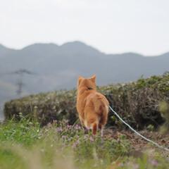 にゃんこ同好会/ねこのきもち/猫のいる暮らし/曇り/散歩/おでかけ/... 空は曇っているニャー🙀 早く晴れにならな…(3枚目)