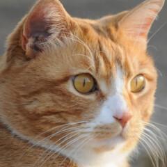 フォロー大歓迎/にゃんこ同好会/猫との暮らし/ねこにすと/ねこのきもち/春/... 🌻季節は進んでいるニャー😸(9枚目)