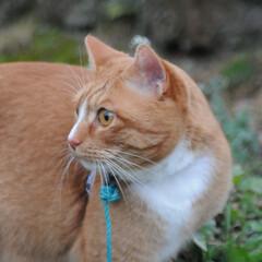 にゃんこ同好会/ねこのきもち/猫のいる暮らし/散歩/おでかけ/フォロー大歓迎 そろりそろり😽 鳥さん遊ぼう➿➿😻(9枚目)