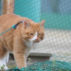 にゃんこ同好会/猫との暮らし/ねこのきもち/散歩/おでかけ まだ散歩したいニャー😿 帰らないニャー😽…(7枚目)