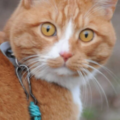 ねこのきもち/猫のいる暮らし/にゃんこ同好会/散歩/おでかけ/フォロー大歓迎 😸今日は体が軽いニャー🐾🐾🐾😻 スリスリ…(9枚目)