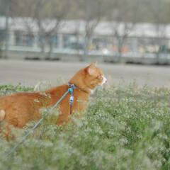 フォロー大歓迎/にゃんこ同好会/猫との暮らし/ねこのきもち/散歩 朝から雨降ってたけど止んでよかったニャー…(8枚目)