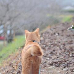 にゃんこ同好会/ねこのきもち/散歩/おでかけ/フォロー大歓迎 😻散歩だー😻 走って行くニャー😻ダーッシ…(2枚目)