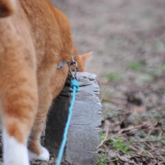 にゃんこ同好会/ねこのきもち/猫のいる暮らし/散歩/おでかけ/フォロー大歓迎 そろりそろり😽 鳥さん遊ぼう➿➿😻(7枚目)