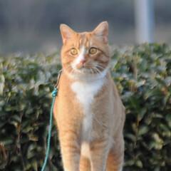 フォロー大歓迎/にゃんこ同好会/猫との暮らし/ねこのきもち/散歩/おでかけ 🙀にゃんだ⁉️ 不審物発見‼️🙀(5枚目)