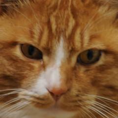 フォロー大歓迎/にゃんこ同好会/猫との暮らし/ねこのきもち/梅の花/散歩/... 梅の花の良い香りがするニャー😽😽😽 今日…(10枚目)
