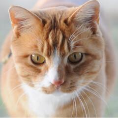 ねこのきもち/フォロー大歓迎/ペット/ペット仲間募集/猫/にゃんこ同好会 さあ 今日もがんばるニャー😼(3枚目)