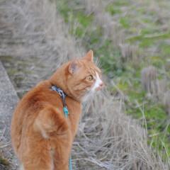 フォロー大歓迎/にゃんこ同好会/散歩/猫との暮らし/ねこのきもち/おでかけ 日が落ちて冷えてきたニャー🙀 お日様が恋…