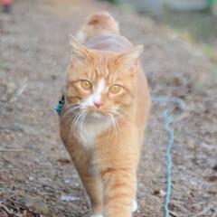 にゃんこ同好会/猫のいる暮らし/ねこのきもち/雨上がり/散歩/おでかけ/... 雨上がりは草が美味しいニャー😻🌱 また雨…(3枚目)