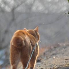 フォロー大歓迎/にゃんこ同好会/猫との暮らし/ねこのきもち/散歩/おでかけ 🙀にゃんだ⁉️ 不審物発見‼️🙀(3枚目)
