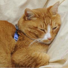 ねこのきもち/寝る子/LIMIAペット同好会/ペット/ペット仲間募集/猫/... 眠たいニャー😪もう寝るニャー😪