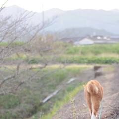 にゃんこ/ねこのきもち/散歩/秋/稲刈り/おでかけ/... 稲刈りが始まったニャー😸 🐸さん たくさ…(3枚目)