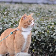 ねこのきもち/猫のいる暮らし/にゃんこ同好会/散歩/おでかけ/フォロー大歓迎 😸今日は体が軽いニャー🐾🐾🐾😻 スリスリ…(5枚目)