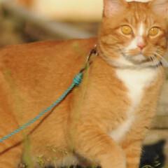 フォロー大歓迎/にゃんこ同好会/猫との暮らし/ねこのきもち/散歩/おでかけ 日向ぼっこは暖かくて気持ちいいニャー😻😻😻(4枚目)