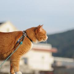 フォロー大歓迎/にゃんこ同好会/猫との暮らし/ねこのきもち/すずめ/鳥/... すずめ🐦さん➿😽 待って~😽🐾🐾🐾➿(8枚目)