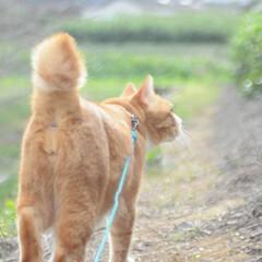 ねこのきもち/散歩/おでかけ/フォロー大歓迎 早く散歩に行こうニャー😻😻😻(4枚目)