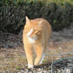 フォロー大歓迎/にゃんこ同好会/猫との暮らし/ねこにすと/ねこのきもち/春/... 🌻季節は進んでいるニャー😸(2枚目)