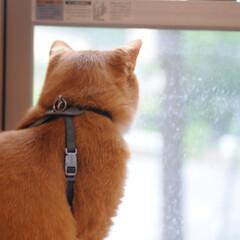 フォロー大歓迎/にゃんこ同好会/ねこのきもち/ねこ/梅雨/雨 雨か...😿☔💤(3枚目)