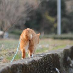 にゃんこ同好会/ねこのきもち/ゴロゴロ/散歩/おでかけ/フォロー大歓迎 いっしょにゴロゴロするニャー😻➿➿ 気持…(5枚目)