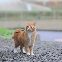 フォロー大歓迎/にゃんこ同好会/猫との暮らし/ねこのきもち/ねこにすと/雨/... 散歩行こうとしたら雨が降ってきたニャー😿…(4枚目)