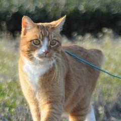 フォロー大歓迎/にゃんこ同好会/猫との暮らし/ねこのきもち/散歩 今日は風が冷たいけど広い草むらで思い切り…(5枚目)