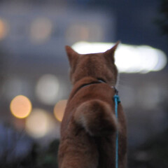 日暮れ/にゃんこ同好会/ねこのきもち/散歩/おでかけ/フォロー大歓迎 夜の街に行きたいニャー😽 何があるのかニ…