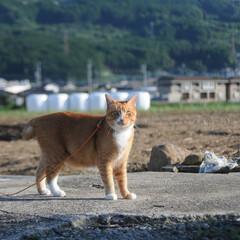 晴れ/散歩/猫のいる暮らし/ねこのきもち/フォロー大歓迎 散歩日和⤴️⤴️⤴️😸🐾🐾🐾🐦➿➿🐦(3枚目)