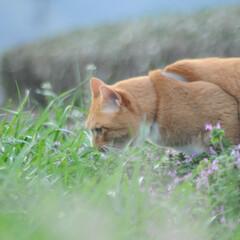 にゃんこ同好会/ねこのきもち/猫のいる暮らし/曇り/散歩/おでかけ/... 空は曇っているニャー🙀 早く晴れにならな…(6枚目)