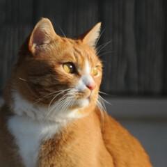 フォロー大歓迎/にゃんこ同好会/猫との暮らし/ねこのきもち/散歩/おでかけ 日向ぼっこは暖かくて気持ちいいニャー😻😻😻(2枚目)