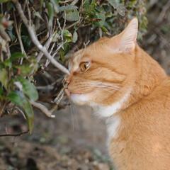 フォロー大歓迎/にゃんこ同好会/ねこのきもち/ねこ/散歩/猫の日 今日は猫の日なのかにゃ🐱 ポカポカ陽気で…(4枚目)