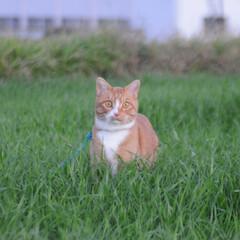 にゃんこ同好会/ねこのきもち/散歩/おでかけ/フォロー大歓迎 草いっぱいだニャー😻 ずっとあればいいの…