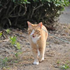 写真/フォロー大歓迎/にゃんこ同好会/ねこのきもち/ねこ/散歩/... 今日は今年一番の暑い日だったニャー😽💦💦…(3枚目)